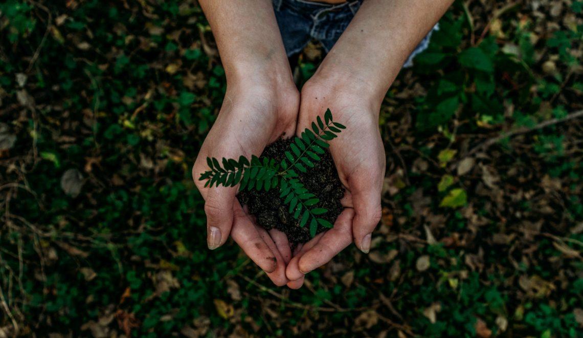 """""""Pillole di Bilancio Sociale 2019"""": l'impegno di CAES per l'ambiente"""