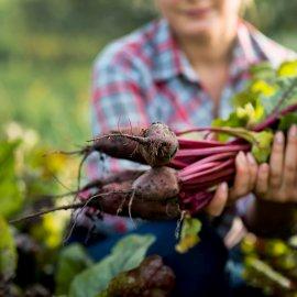 Le pratiche per l'agricoltura sostenibile di WWOOF Italia, partner di CAES